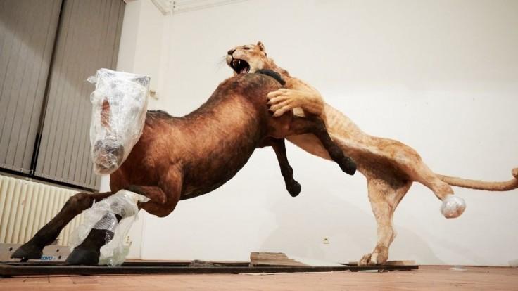 Fotogaléria: Pozrite si gigantickych živočíchov na chystanej výstave SNM