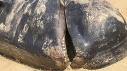 Stovky veľrýb uviazli na brehu ostrova, väčšina z nich uhynula