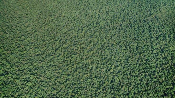 Pod zeleňou amazonského pralesa našli záhadné veľké obrazce