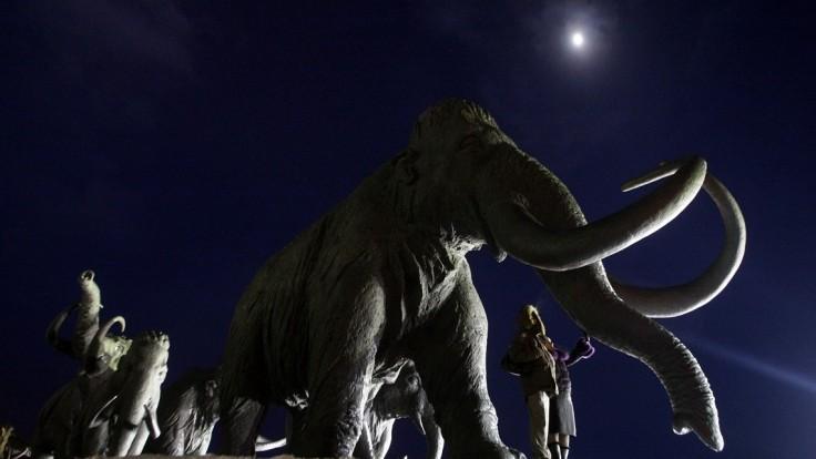 Mamut je krok pred znovuoživením. Bude slonom so 45 zmenami
