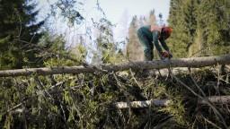 Silná víchrica vo Vysokých Tatrách vyvrátila stovky stromov