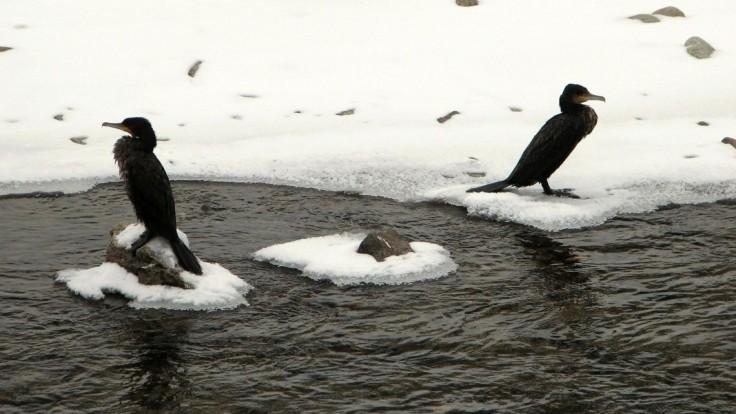 Pokus ich stál život. Otec so synmi chceli prekonať zamrznuté jazero