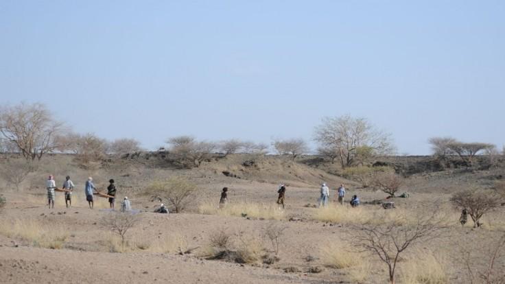 V Etiópii zaznamenali desiatky šteniat ohrozenej africkej šelmy
