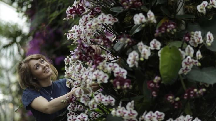 Kvetine, ktorá rastie na jedinom mieste na svete, hrozí zánik