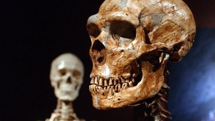 Neandertálci používali lieky. Vo vegetariánstve im bránil kanibalizmus