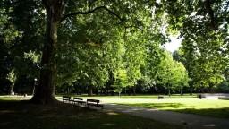 V Bratislave mizne zeleň, mesto chce spíliť aj stromy pri pamätníku SNP