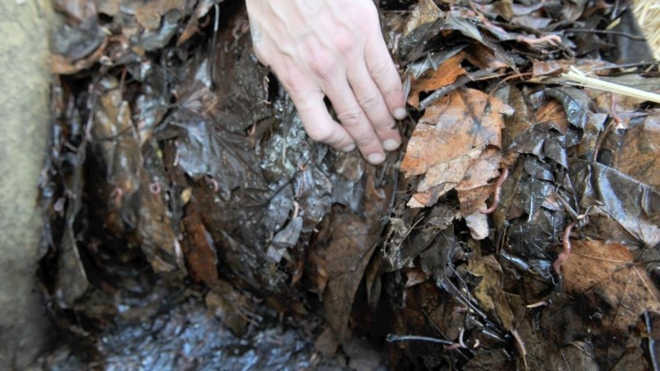 Bratislavčanov čaká novinka, do domovov im donesú kompostéry