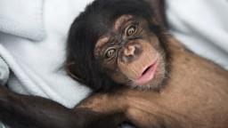 Zvieratá sú schopné súcitu, ukazuje jedinečné video