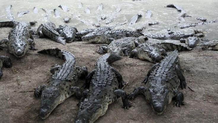 Odvaha jej nechýba, manžela vytiahla z čeľustí krokodíla