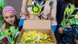 Do slovenských miest vyrazili dobrovoľníci, rozdajú asi milión narcisov