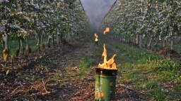 Ovocinári zvládli mrazy, na nepriazeň počasia sa pripravili