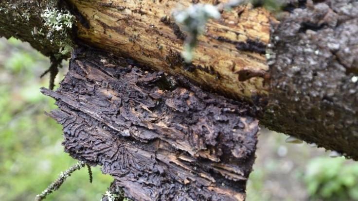 Na pozemku poľského ministra postínali desiatky stromov. Ide o pomstu?