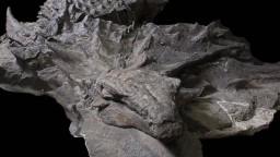 Našli najlepšie zachovaného dinosaura, vyzerá ako spiaci drak