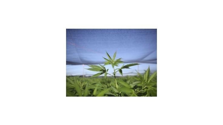 Fico podporí prípadné zmiernenie trestov za užívanie marihuany