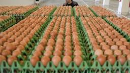 Kontaminované vajcia prenikli aj do bratislavských hotelov