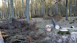 Súdny dvor EÚ zakázal Poľsku výrub Bielovežského pralesa