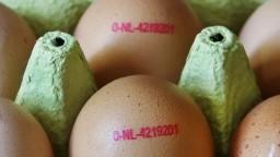 Ceny vajec výrazne narastú, Holanďania zastavili ich produkciu