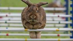 Živé zviera nie je vec, tvrdí SaS. Chce meniť Občiansky zákonník