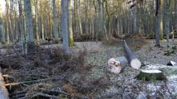 Karpatské bukové pralesy zo zoznamu UNESCO sú u nás ohrozené