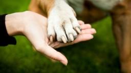 Čipovanie psov bude povinné, majitelia budú riskovať pokuty