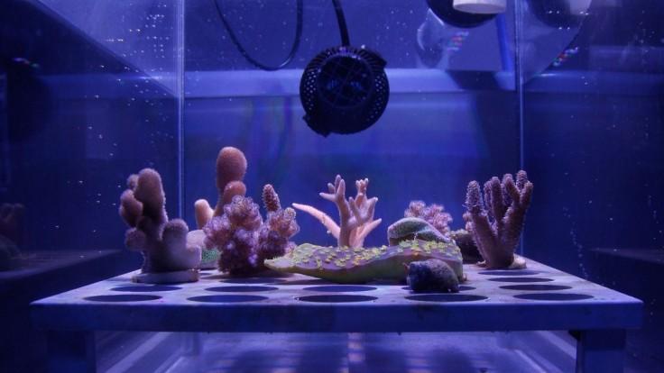 Plávajúci povlak by mohol chrániť koralové útesy pred vyblednutím