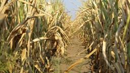 Európsky úrad preverí, či Slovensko nezneužívalo agrodotácie