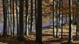Slovenské pralesy majú šancu na prežitie, lesníci chcú zabezpečiť ich ochranu