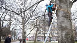 Bratislava osádza búdky pre vtáctvo, chce zlepšiť ich životné podmienky