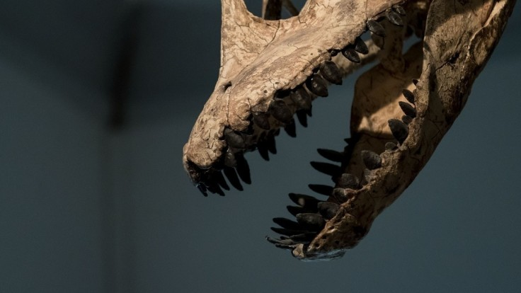 V Škótsku objavili vedci dinosaurie stopy celosvetového významu