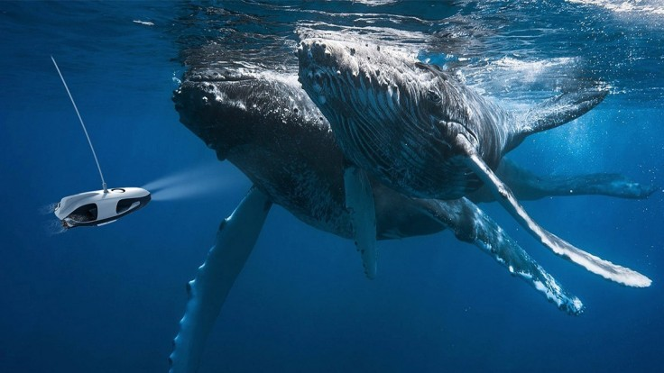 PowerRay je tichý pomocník rybárov, ktorý nakrúca aj 4K videá