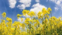 Nedostatok vlahy ohrozuje úrodu, najviac sú ohrozené obilniny