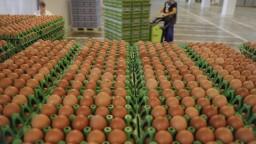 Produkcia vajec je ohrozená, zmiznúť majú vajcia z klietkových chovov