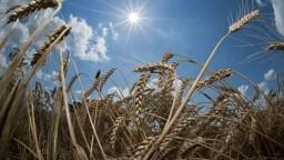 Má vzniknúť Rizikový fond, poľnohospodárom bude pokrývať škody