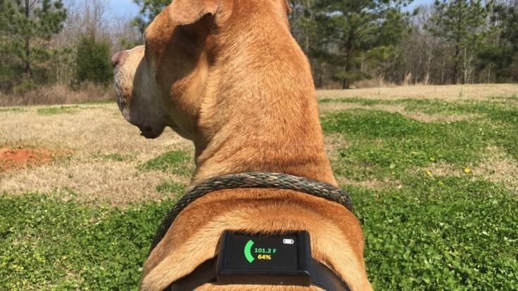 S Dawg Tag môžete zachrániť svojho psa pred prehriatím