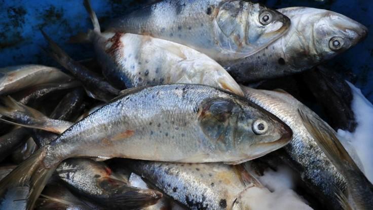 Spotreba rýb je neudržateľná, na vine je naša honba za zdravím