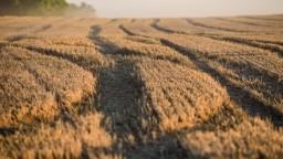Matečná chce pomôcť farmárom. Na boj so suchom pôjdu milióny eur