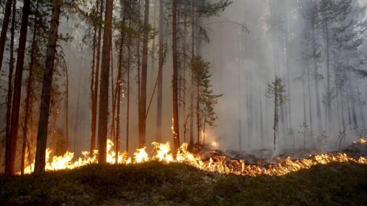 Diaľnice v Brandenbursku uzavreli, les zachvátil mohutný požiar