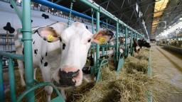 Extrémne teploty trápia hospodárske zvieratá a ohrozujú úrodu