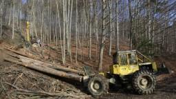 Drevo začnú ťažiť po novom, verejné súťaže budú každé štyri roky