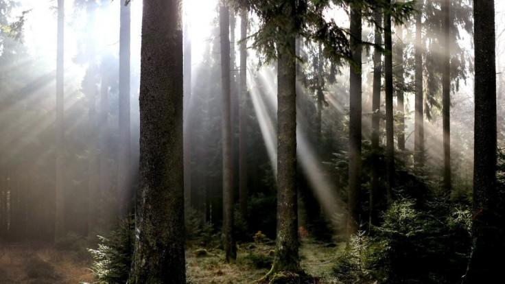 Pod listami v českom lese objavili nádobu, bol v nej poklad