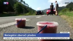 Tatry sú plné nelegálnych zberačov, berú potravu zvieratám