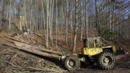 Ochranári bijú na poplach, lesníci chcú drevo z chránených území