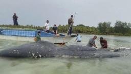 Nález veľryby vyvolal zdesenie. Jej telo bolo plné plastu
