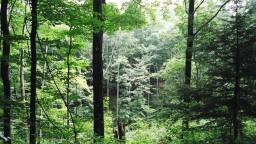 V lesoch Tribeča miznú ľudia, záhadu spracovali v knihe i filme