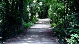 Bratislavské lesy chcú deliť do zón. Výletníci by nevideli výruby