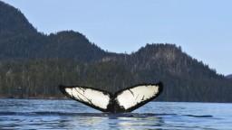 Loď sa zrazila s veľrybou. Na palube boli desiatky pasažierov