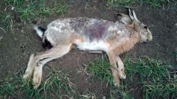 Otrávili takmer stovku zvierat, medzi nimi aj chránené druhy