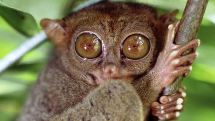 Vedci hľadajú zviera, ktoré nikdy nespí. Je spánok nevyhnutný?