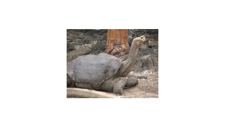 Zomrel prastarý symbol Galapág, posledná korytnačka svojho druhu