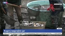 Rybári riešia problém s úhynom rýb, nejde podľa nich o nič výnimočné